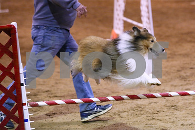 us-dog-agility-association-competition-underway-at-texas-rose-horse-park