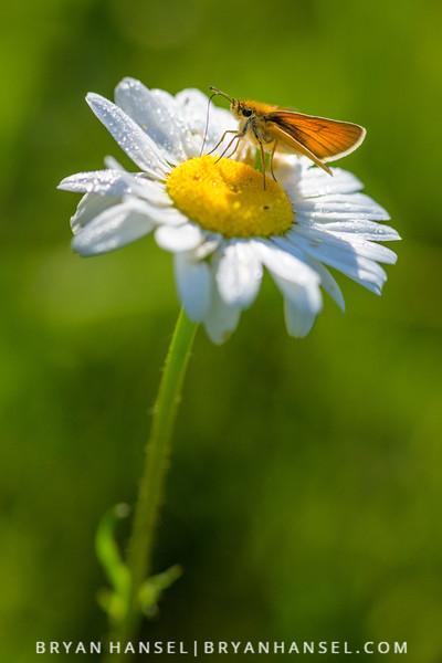 Don't Mind if I Nectar