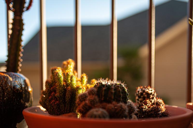 cactus 020120-1293.jpg