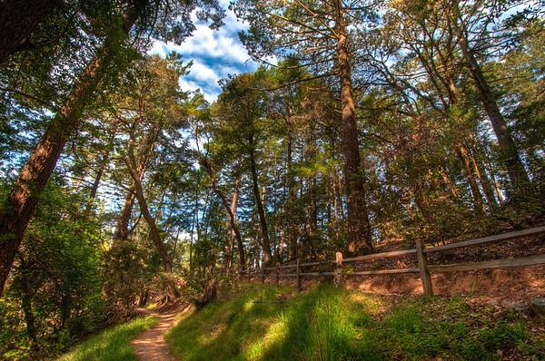 Mt.Tam dipsea trail in HDR