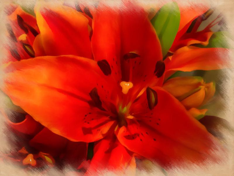 July 31 - Floral burst.jpg