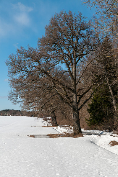 Häringe, 2013-03-10