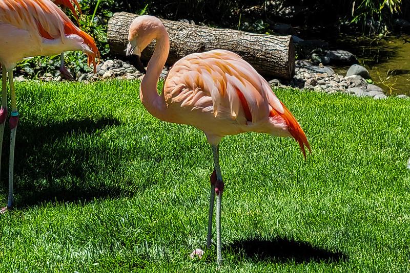 07-05-2021 Winston Wildlife Safari-9.jpg