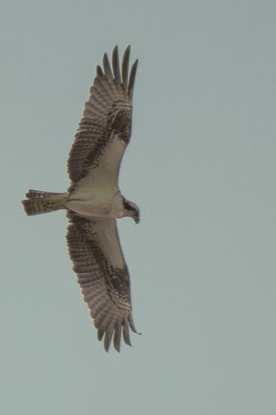 19-Sept North America Birds-2984.JPG