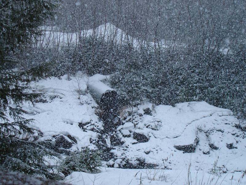 Alaska 2008 076.jpg