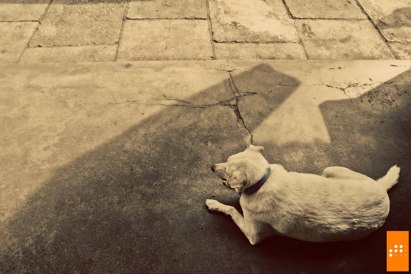 """""""I sleep in the shade"""". Took this with Sony R1 outside Pulau Tikus - 19 September 2009"""