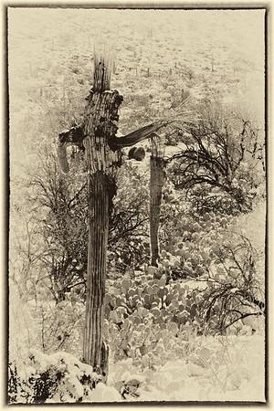 Saguaro Semaphore - Saguaro National Monument, Tucson, AZ