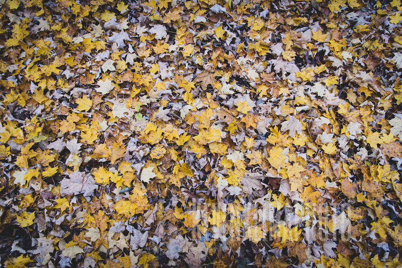 arboretum-oct2018-36.jpg