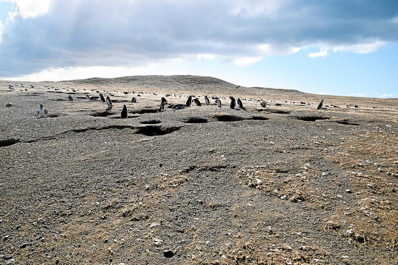 Penguin_Colony_037.jpg