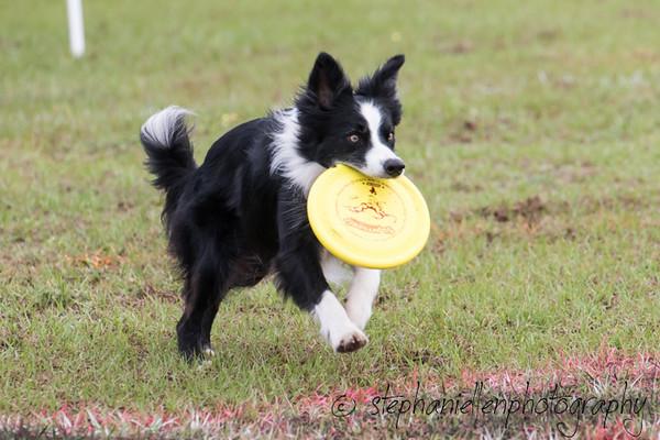 _MG_2306Up_dog_International_2016_StephaniellenPhotography.jpg