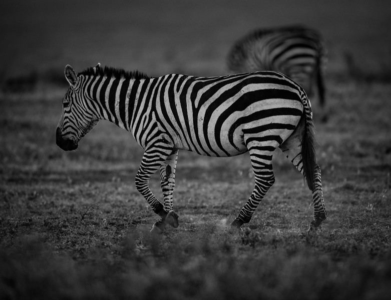 Tanzania_Feb_2018-313.jpg