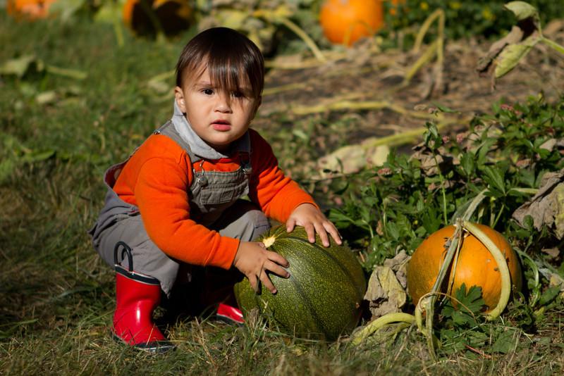 PumpkinPatch2012-283.jpg