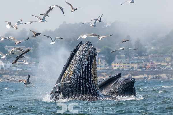 Wildlife of the Monterey Bay