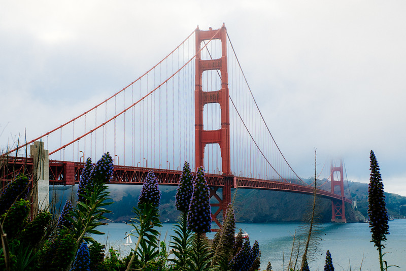 Golden Gate Flowers