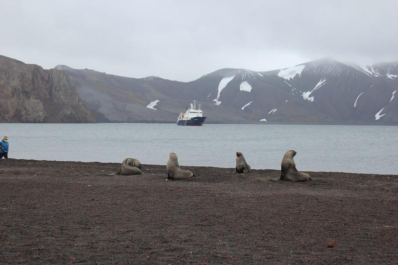 Antarctica 081.JPG