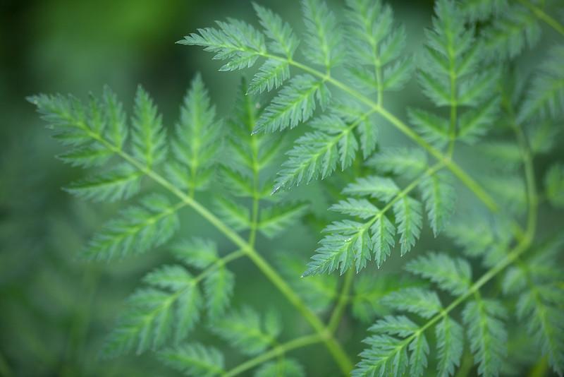 Bending Ferns
