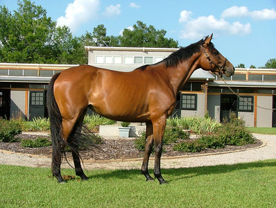 SOLD! Corollet - 2006 TB mare