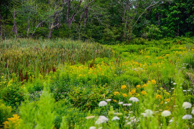 Maine Green 44