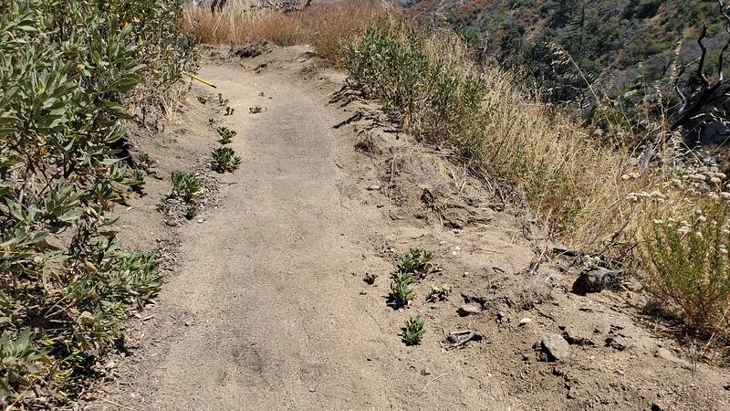 20190810026-Los Pinetos trailwork.jpg