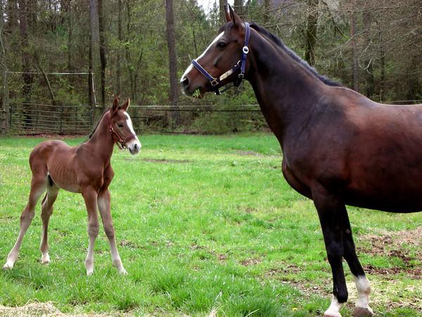 Barn & Horse Photos