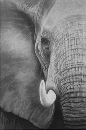 """Big"" (charcoal) by by Carol Gromer"