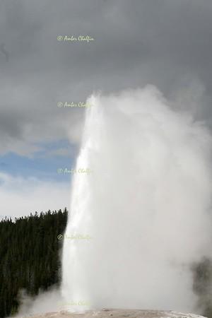 Yellowstone- Jackson Hole 2009