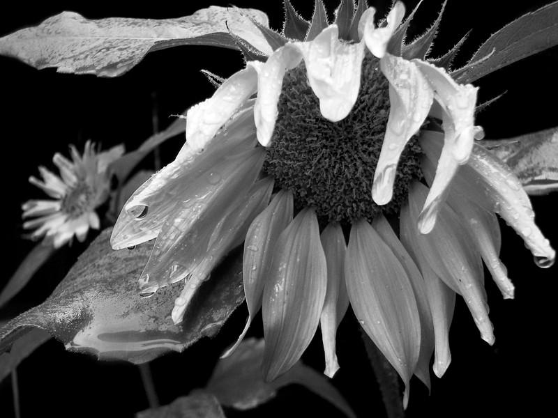 amh FLOWERS (1938).jpg