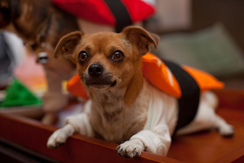 Dog-sushi-halloween2-4.jpg