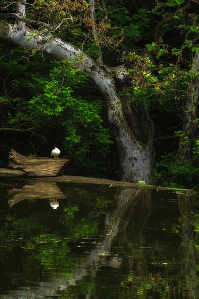 Mascott Dam - Fairy tale Reflection (p).jpg