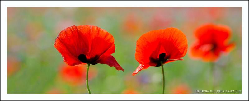 Rohrbaugh Photography Flowers 109.jpg