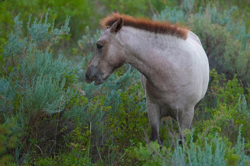 Horse_DRM6837.jpg