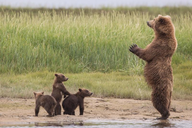 alaska-bears-37.jpg