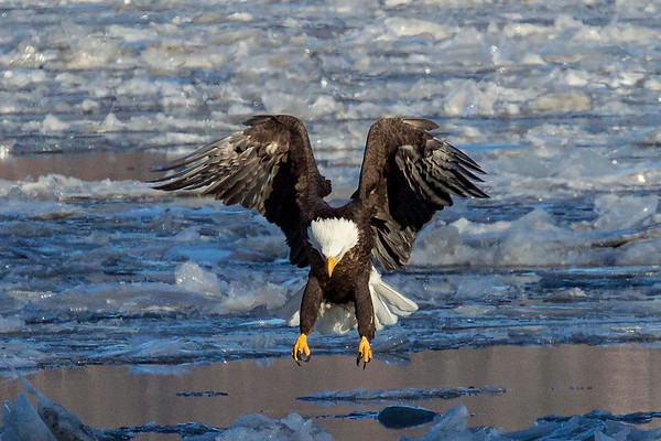 Eagles 2014