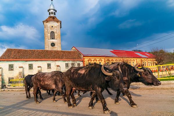 Transylvania 2019