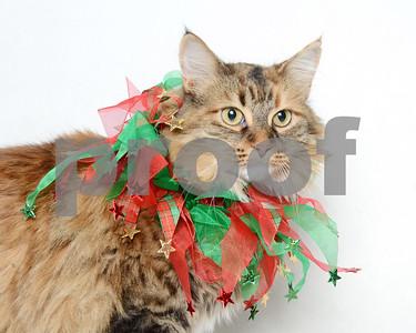2016 November Cat Gallery