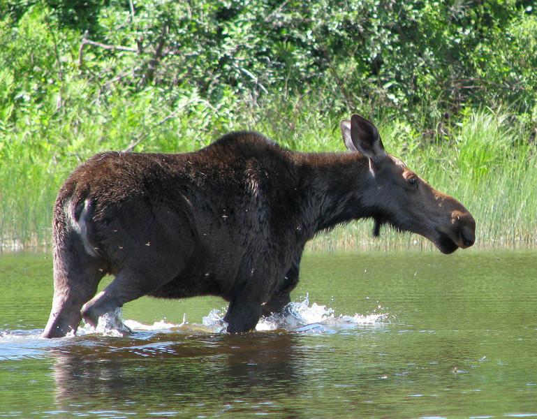 Groundhog River 2010 -  (31 of 95)