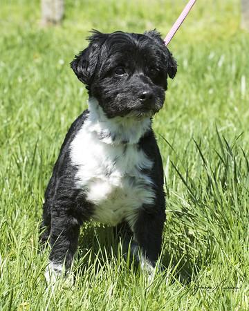 MHF Pups 4-16-19