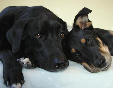 Jake & Max