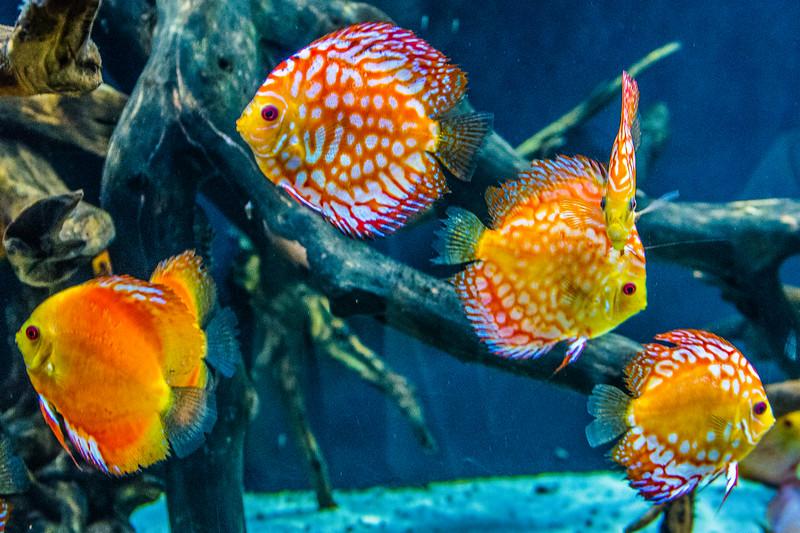 GA Aquarium with Linc, Ali & Abe-134.jpg