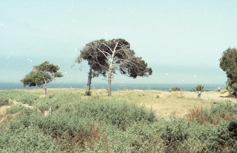 film726.jpg