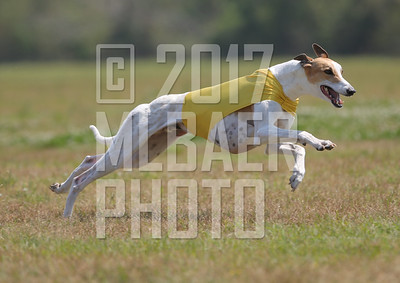 greyhound-karen