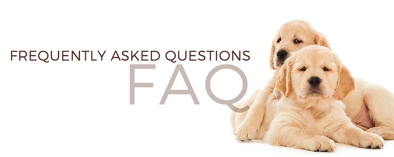 FAQ banner  .png