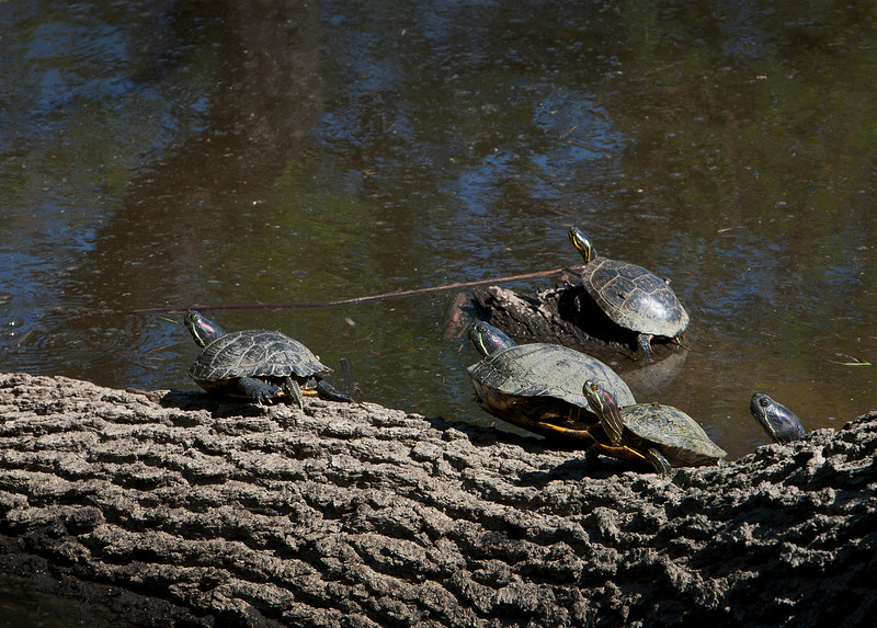 close up turtles.jpg