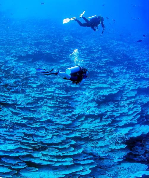 _Panorama_Underwater_Wall.jpg