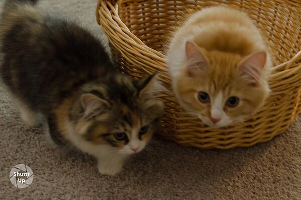 Liam & Lila