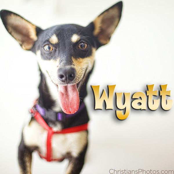 Wyatt1.jpg