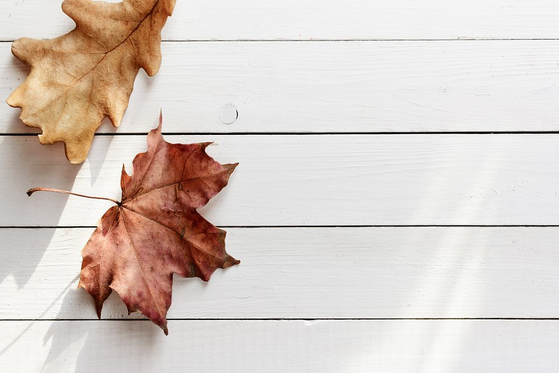 Autumn leaves on white wooden planks background