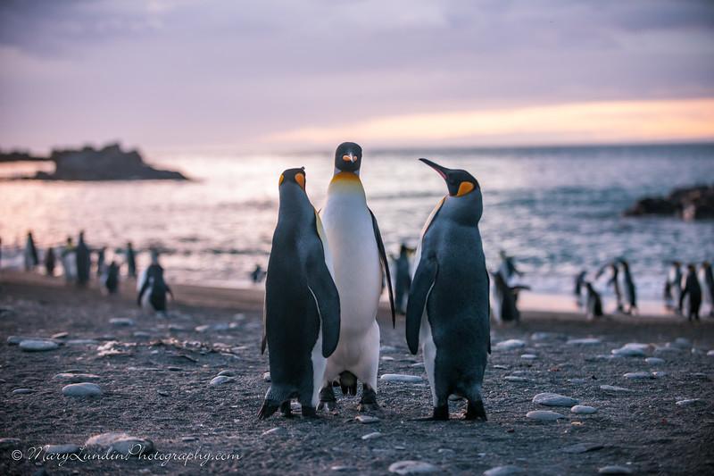 Antarctic-74