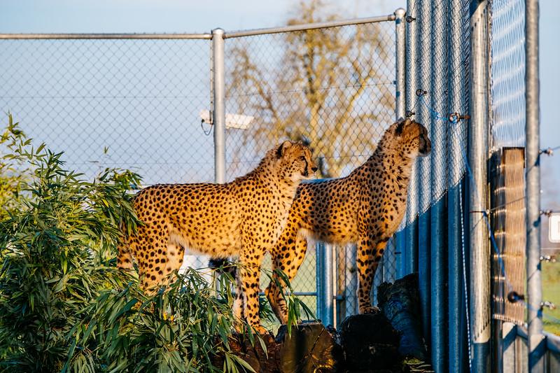 Tonis Zoo-0197.jpg