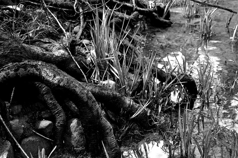 roots 7-30-2011.jpg